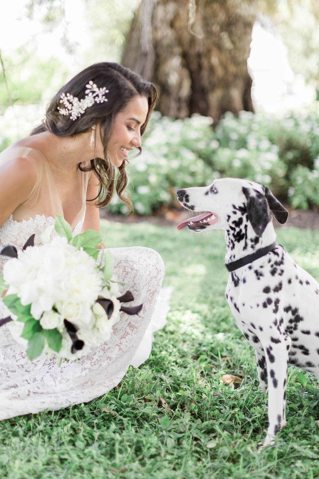 Dalmatian with bride for wedding inspiration shoot